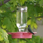 Attracting Hummingbirds…